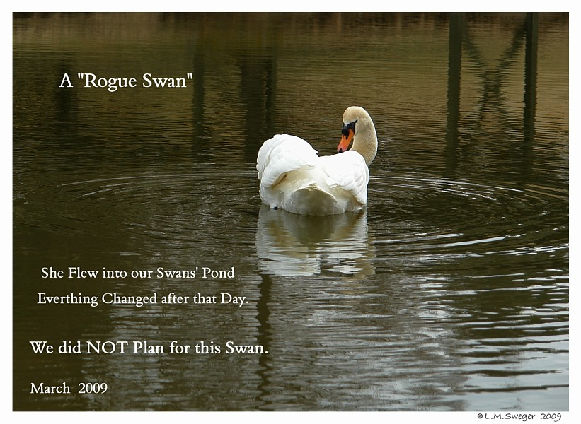 Rogue Swan