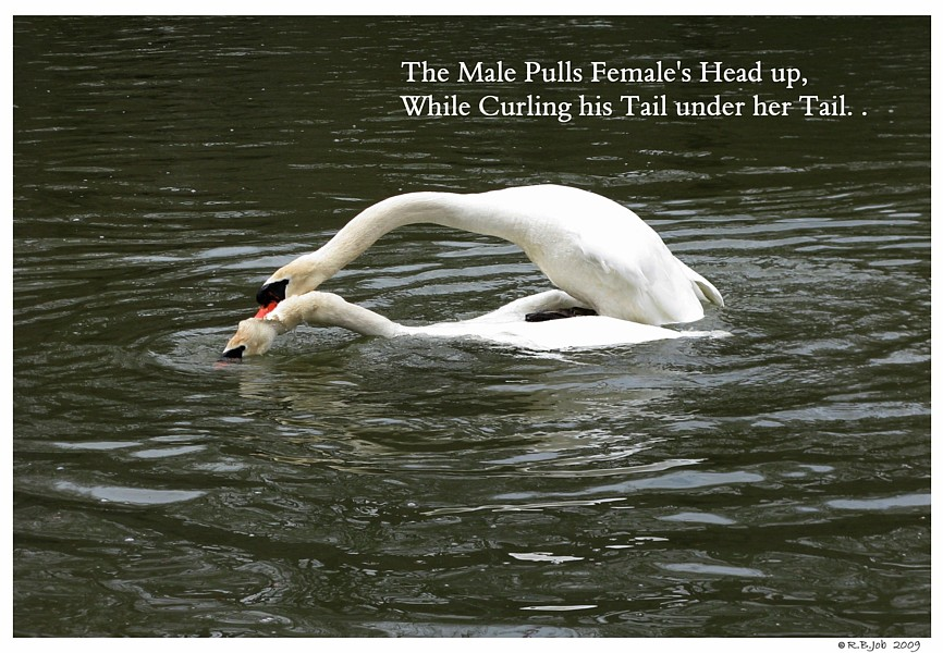 Male Pulls Female Head Up
