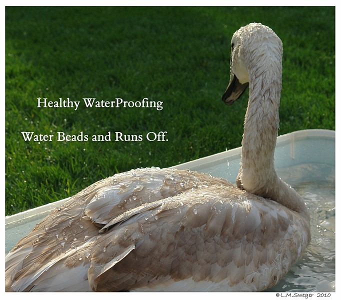 WaterProofing Feathers