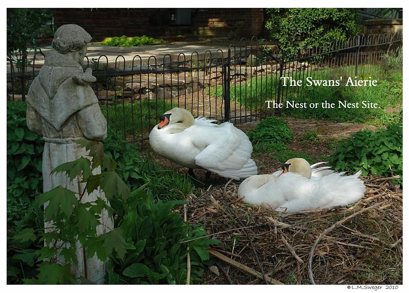 Swan Nest Aerie