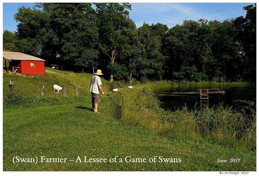 Swan Farmer