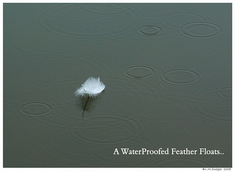WaterProofed Feather