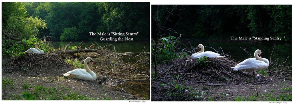 Sitting Standing Sentry