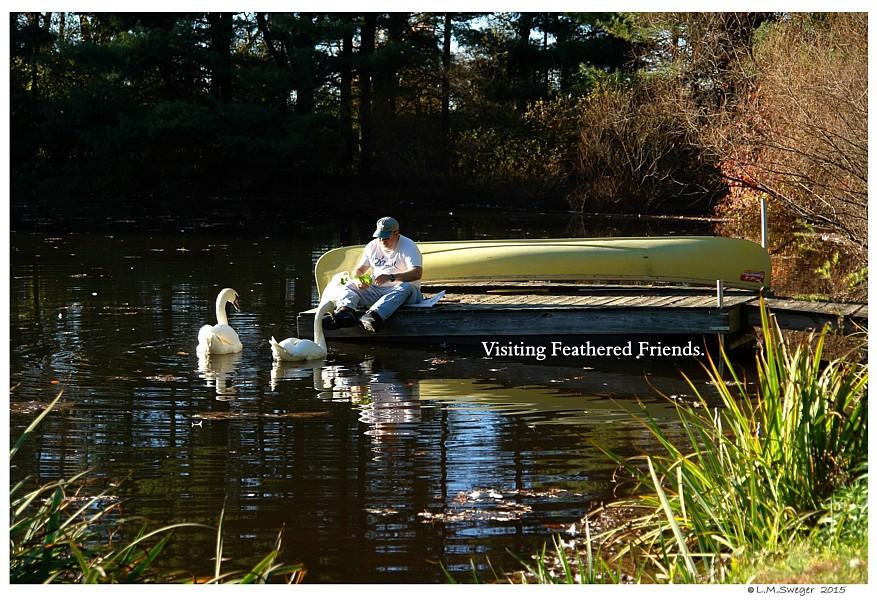 Socialized Swans