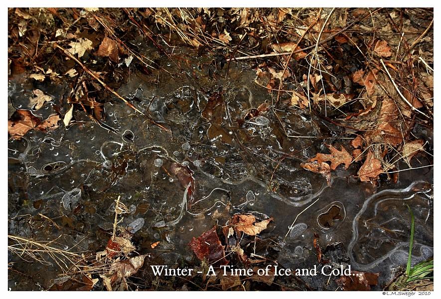 Winter Swan Pond Ice