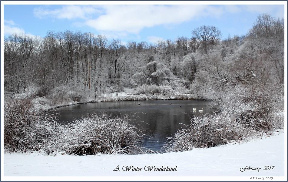 Swan Winter Wonderland