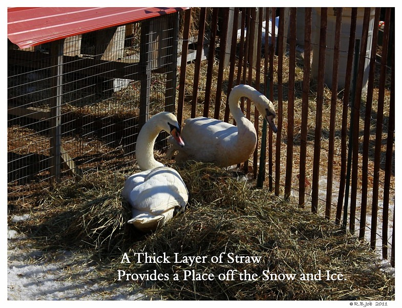 Straw to on Ice & Snow