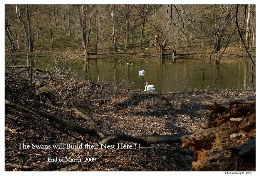 Swan Cob Planning
