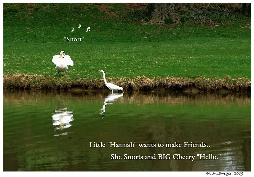 Lonely Mute Swan