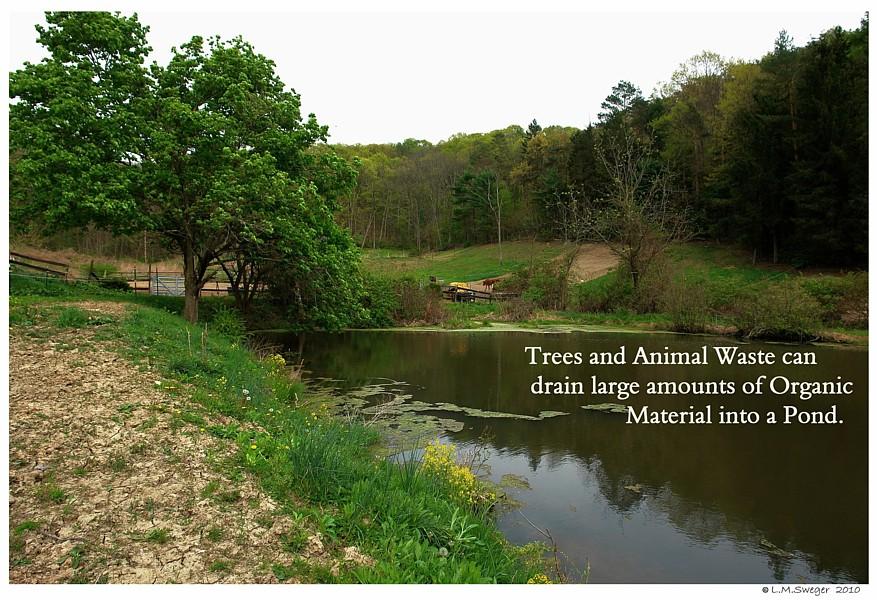 Organic Pond Run Off