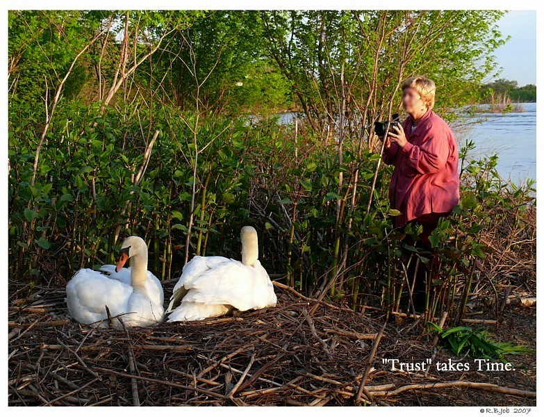 Swan Nest Trust