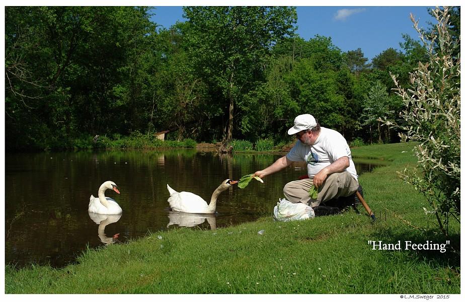 Swan Trust