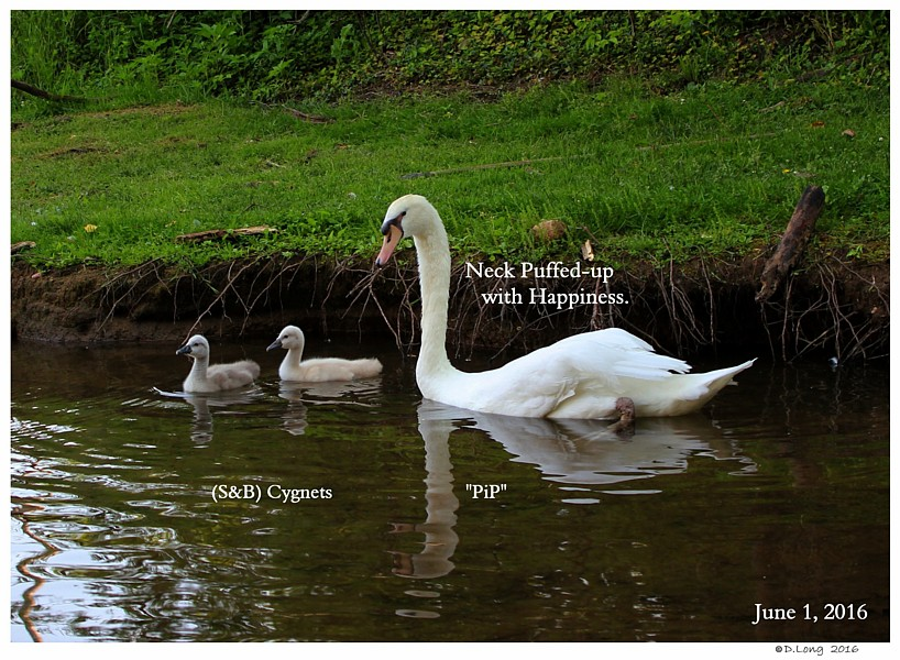 Swan Expresses Happiness