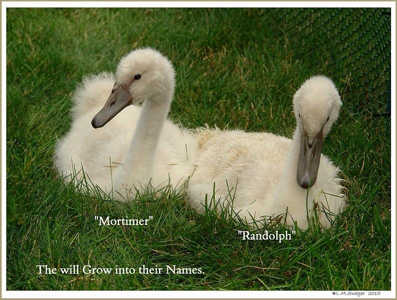 Mortimer & Randolph