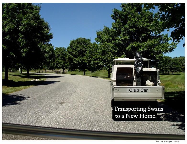 Transport Swan
