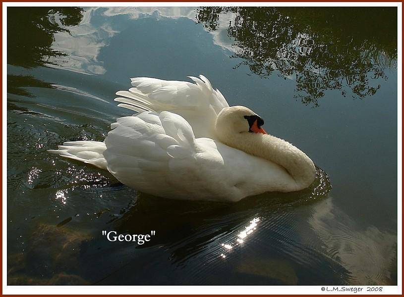 Swan George
