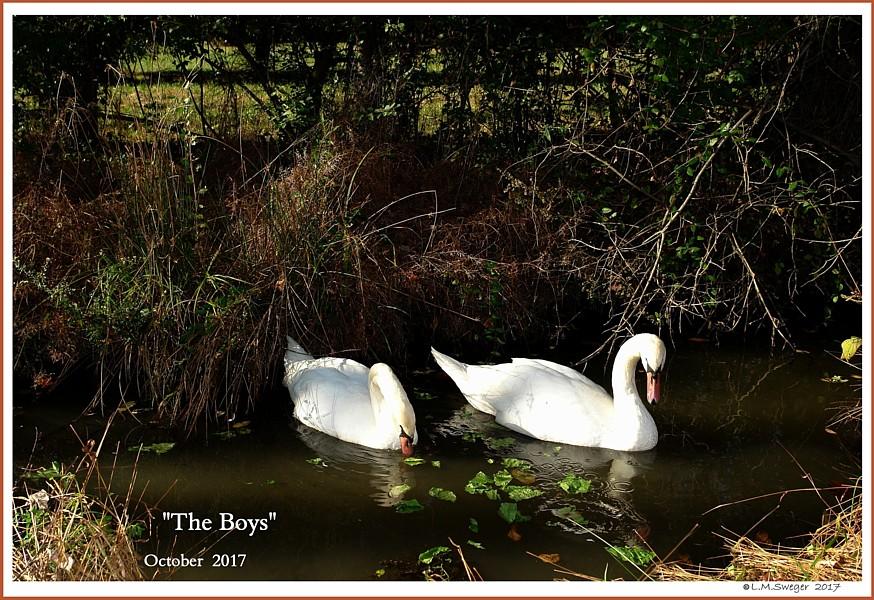 Boy Swans