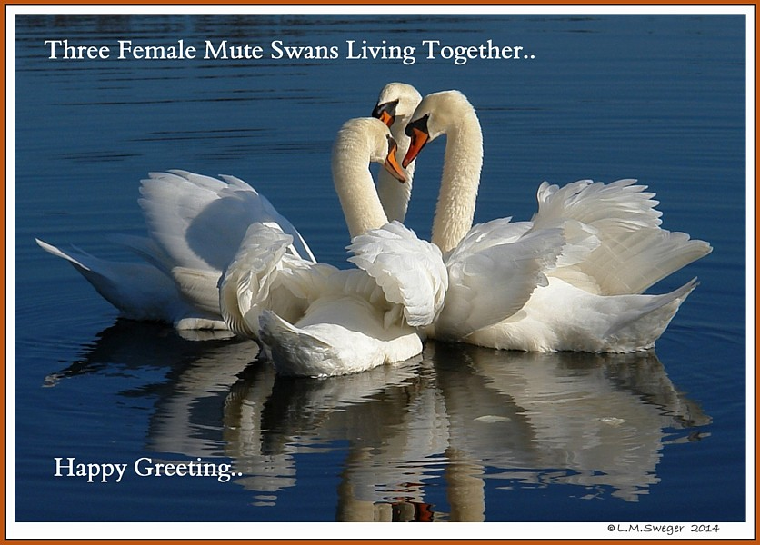 Swan Threesome