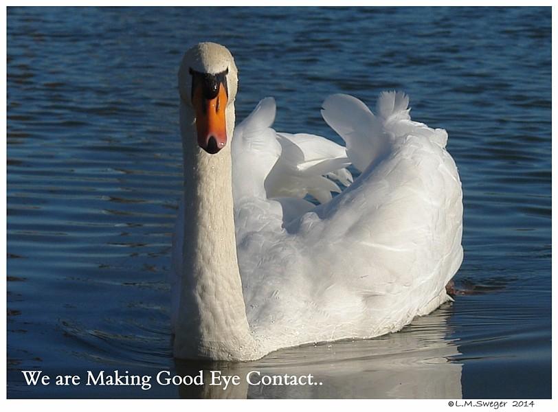 Swan Trust Eye Contact