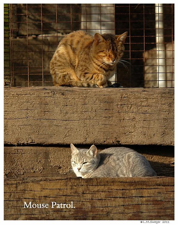 Mouser Barn Kittens