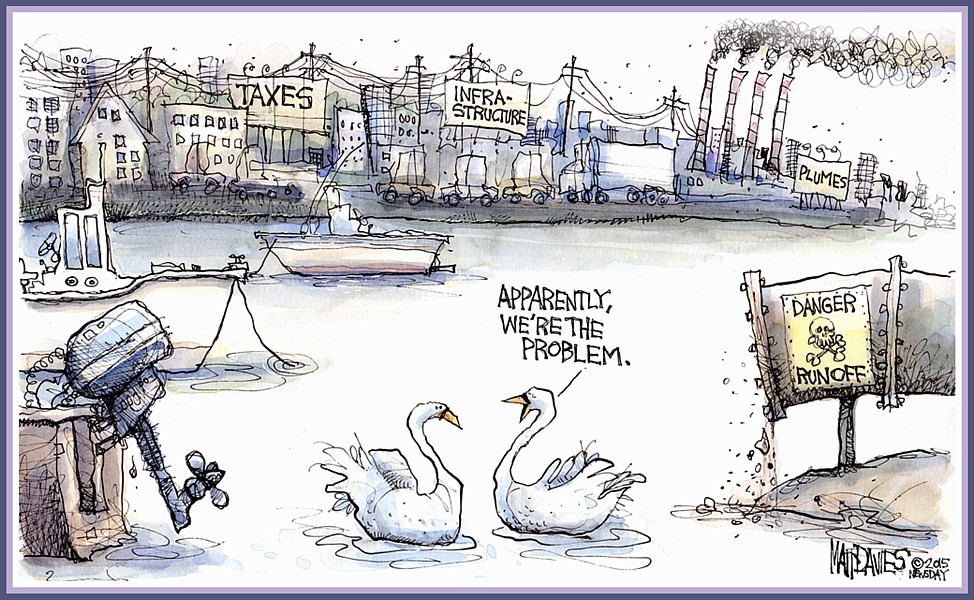 Problem Mute Swans