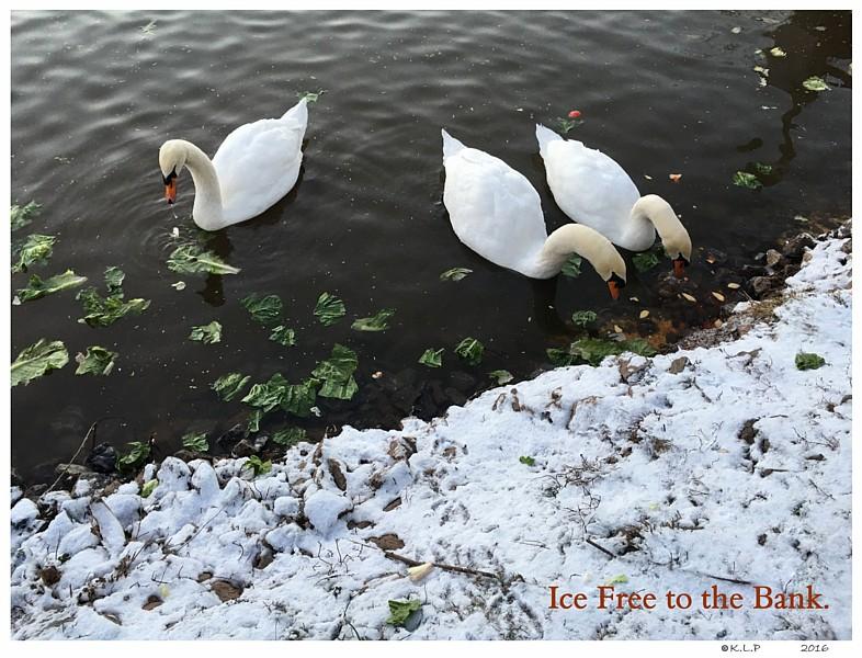 Winter DeIcing Pond