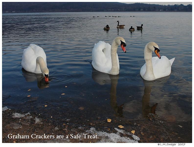 Graham Crackers Swans