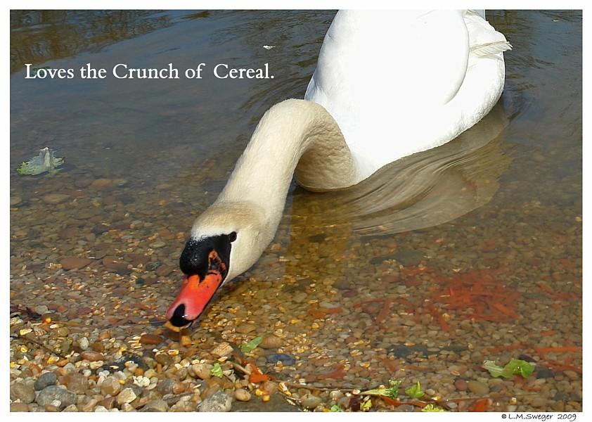 Swan Treats