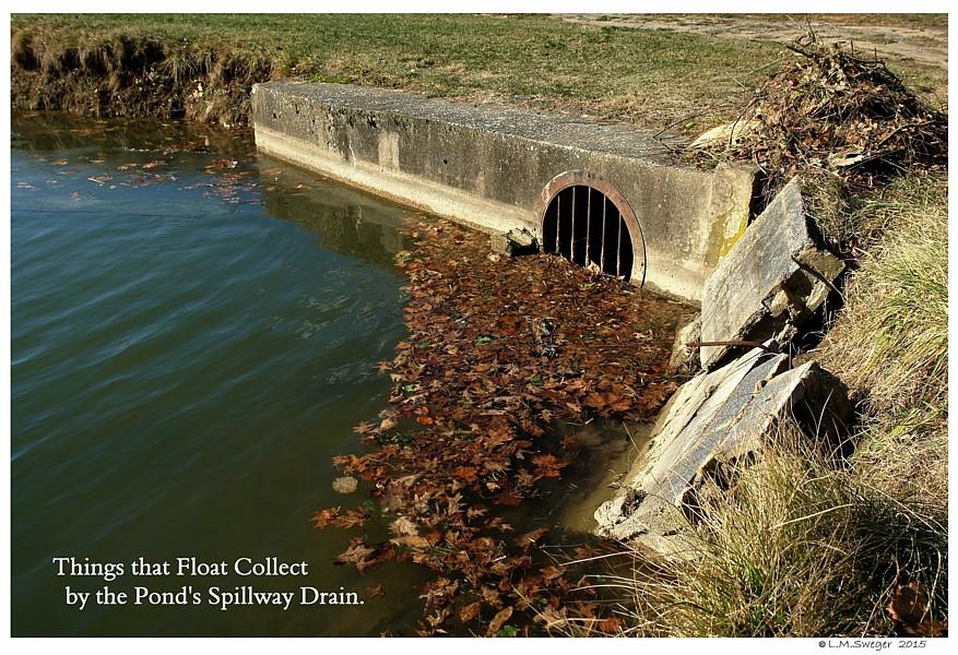 Pond Spillway