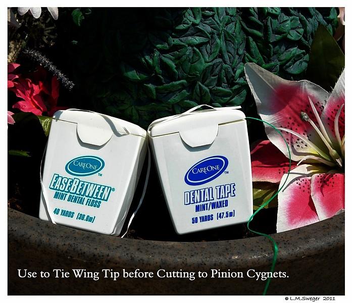 SWAN Pinion Dental Tape