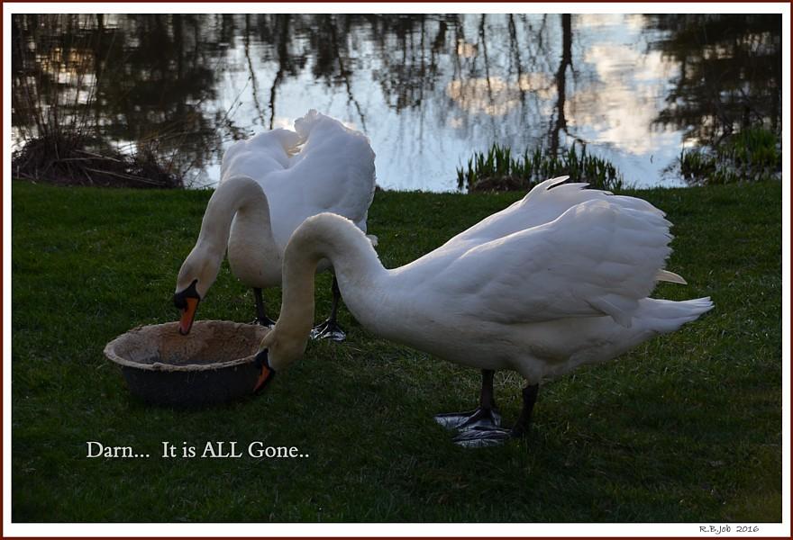 Swan Moonshine Mash