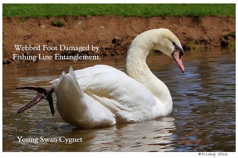 Swan Fishing Line