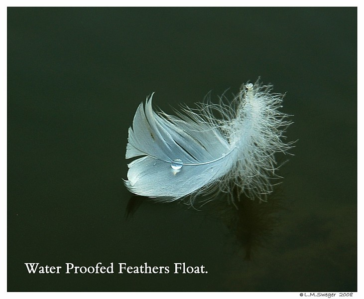 WaterProof Feather