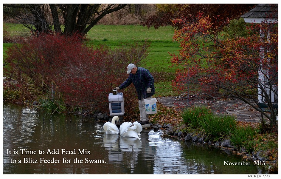 Aut-O-Dine Feeder for Swans