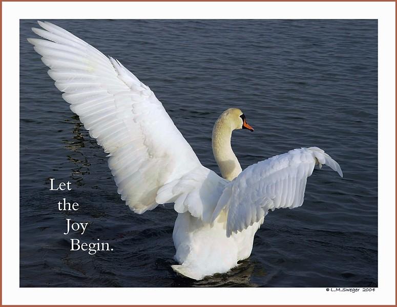Joy of Swans