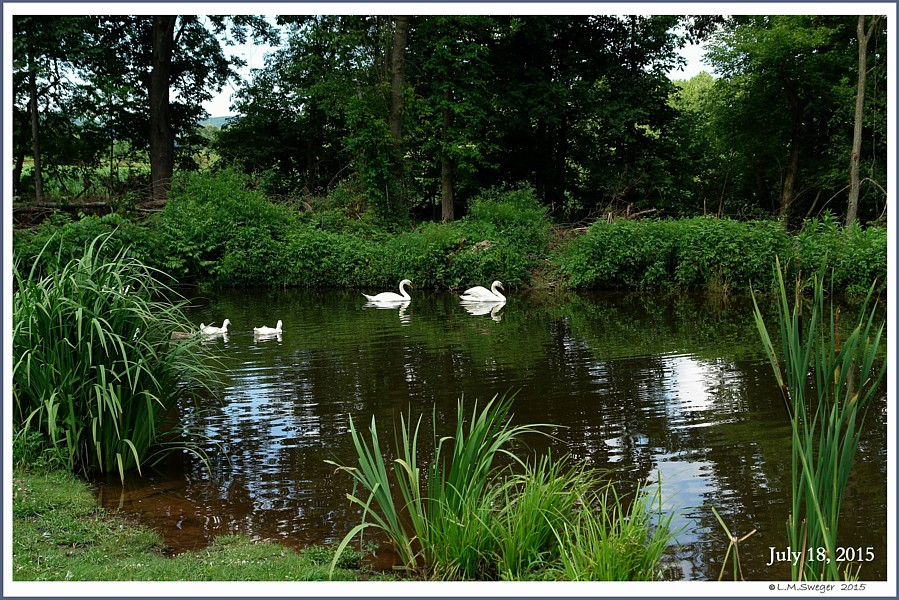 Basic Swan Care