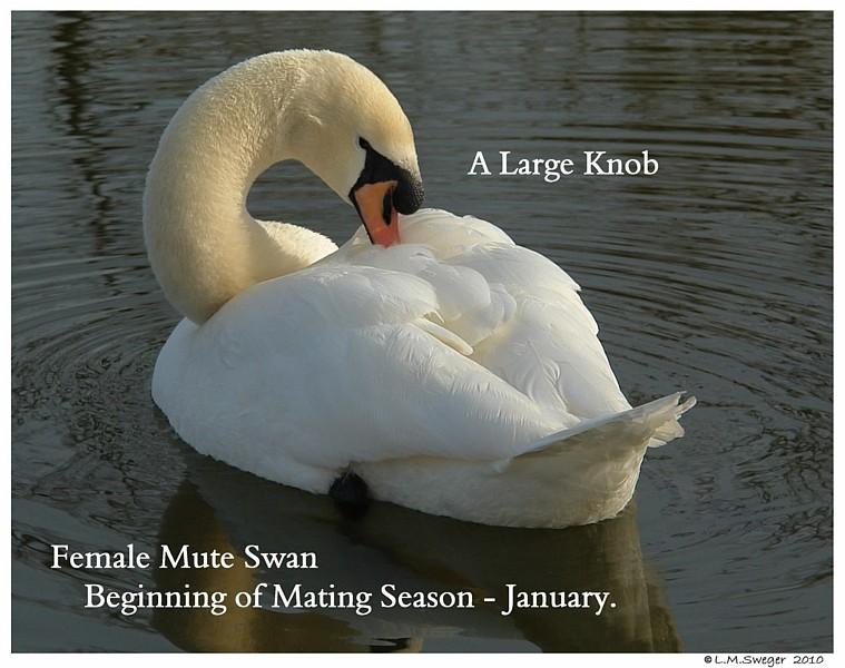 Female Mute Large Knob