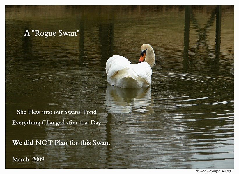 Female Rogue Swan