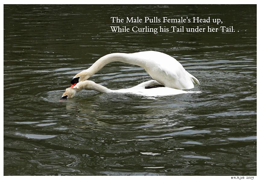 Male Pulls Female Head Up