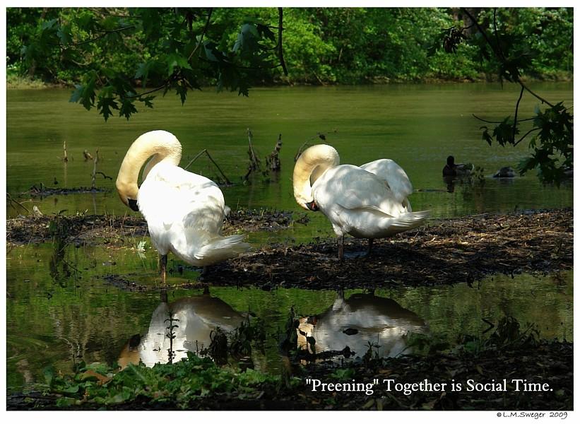Preening Social Behavior