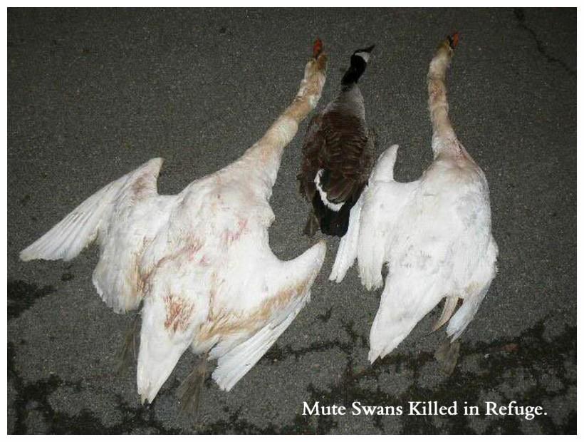 Swan Keeping Terms