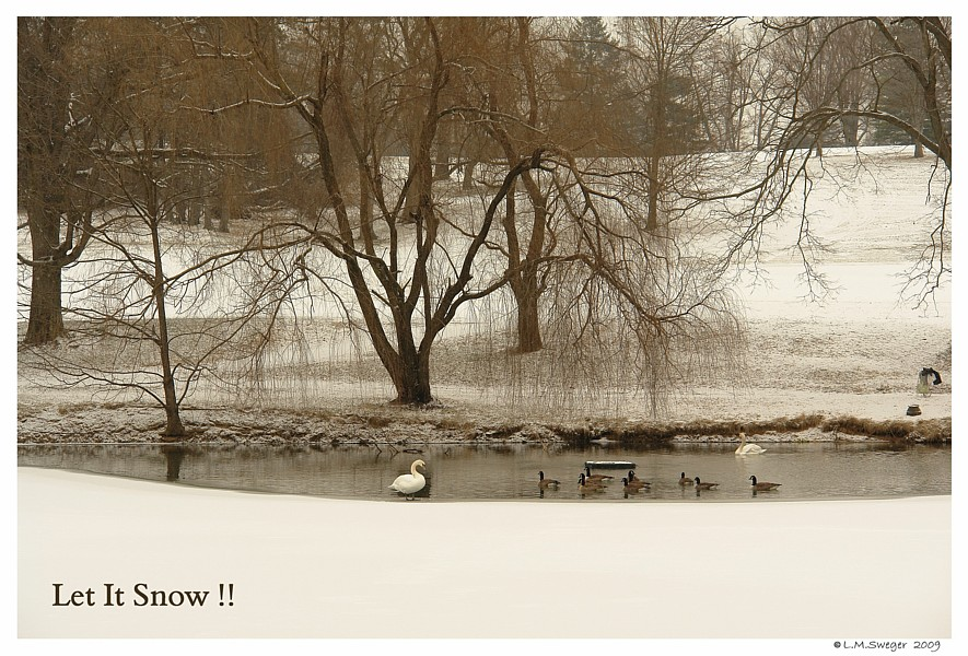 Winter Swan Pond