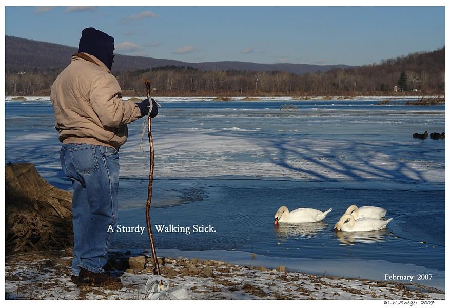 Swan Winter Care