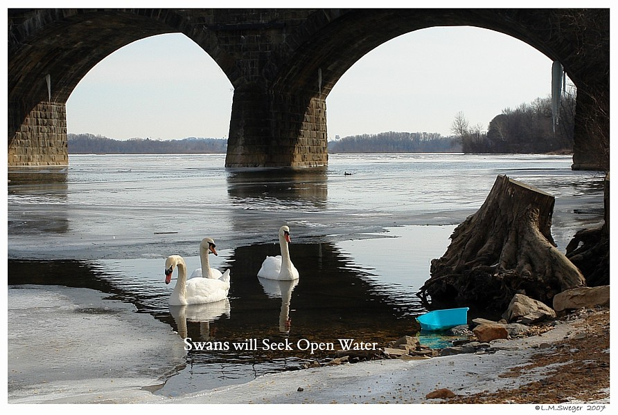 Swan Open Water