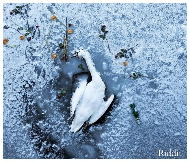 SWAN Winter Care Froze to Death