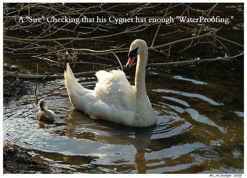 Cygnet WaterProof