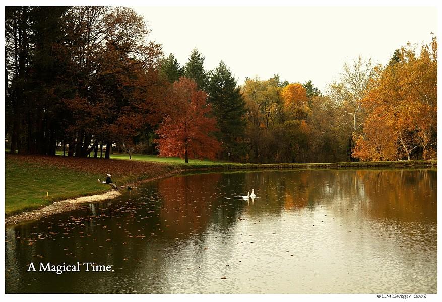 Fall Swan Pond