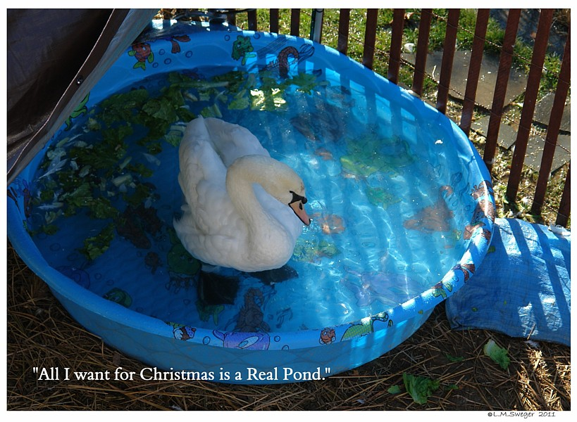 Kidde Pool Swan