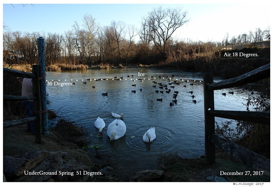 Swans Natural Spring