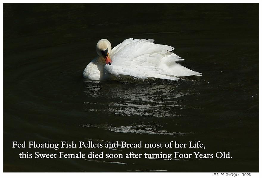 NO Bread Swans Poor Diet